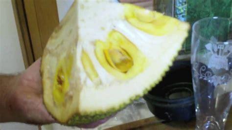 jack fruit how do you eat it youtube