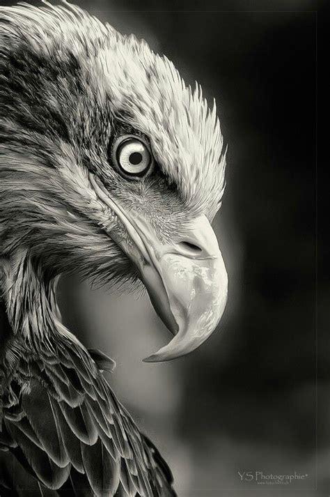 Humm3r Eagle Black With Real Pic 雄鹰图片 动物图片 fzlu图片网