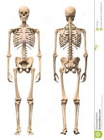 9 X 11 Rug Mannelijk Menselijk Skelet Twee Meningen Voorzijde En