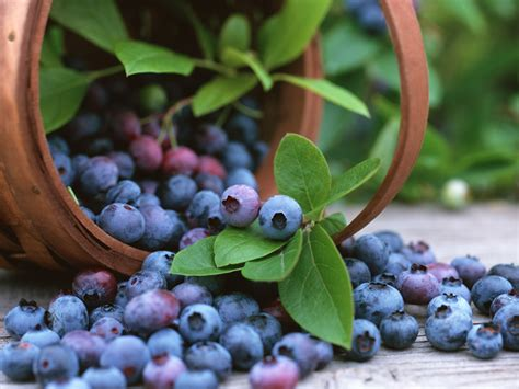 the wellness garden grow eat and walk your way to better health books how to grow blueberries the garden of eaden