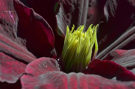 blumen im garten pflanzen pflanzen und blumen im garten seite 3
