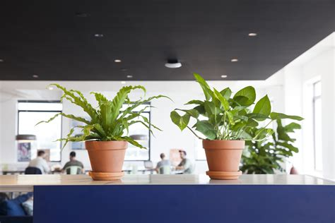 Plant For Office Desk How To Choose The Best Office Plant For Your Work Space