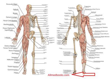anatomy coloring book mccann eric wise 89 grays anatomy coloring book pdf anatomy coloring