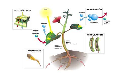 plantando semillas la practica 8499884628 cuaderno de biologia 6sem practica consumo de ox 237 geno durante la respiraci 243 n de semillas de