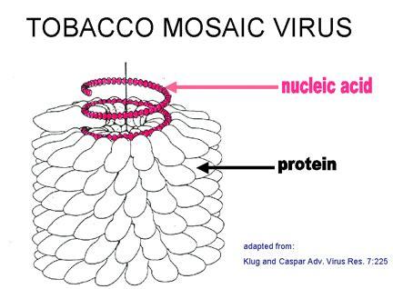 virus membuat antitoksin welcome to dedek s blog makalah mikrobiologi