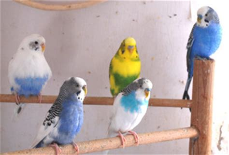 pet stores in ma that sell puppies speak out for parrots coalition to protect and rescue pets