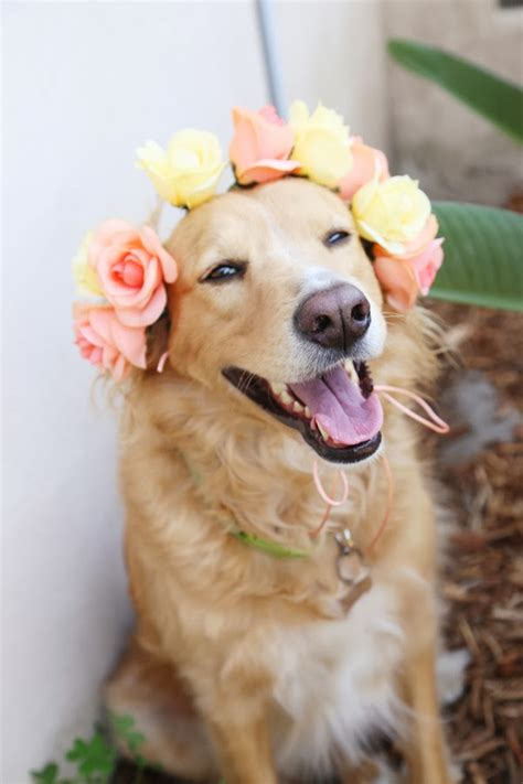 puppy flowers acute designs diy doggie flower crowns a wedding shower diy