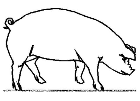 pig coloring page preschool free coloring pages of a pigs head