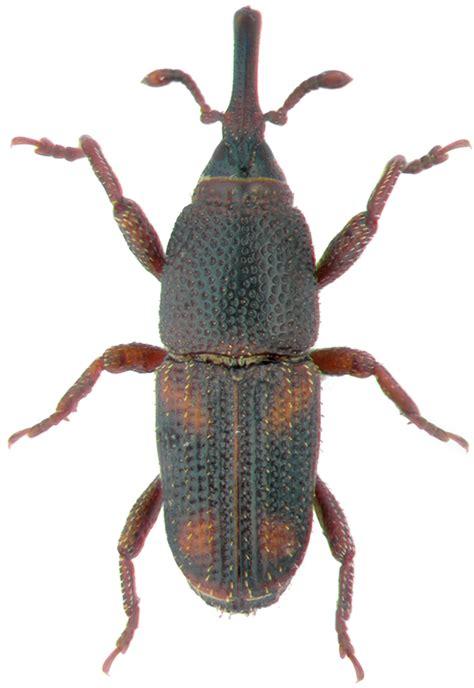 insetti appartamento appartamento pieno di minuscoli insetti