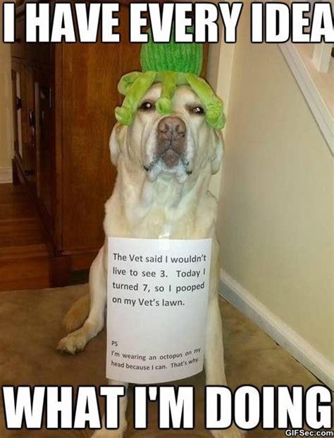 Blogging Memes - meme awesome dog jpg