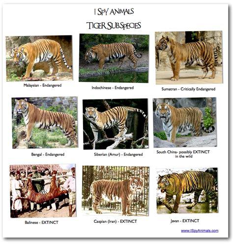 i spy animals i spy games in the animal kingdom