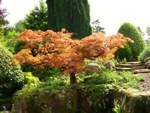 Types Of Japanese Garden - file hever castle japanese maple jpg wikimedia commons