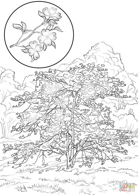 coloring pages of dogwood flowers dogwood flower coloring pages sketch coloring page
