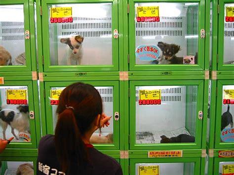 pet store to buy puppies day 3 ghibli museum mitaka