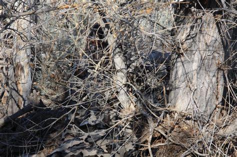 realtree camo 17037 realtree camo hd photo wallpaper walops com
