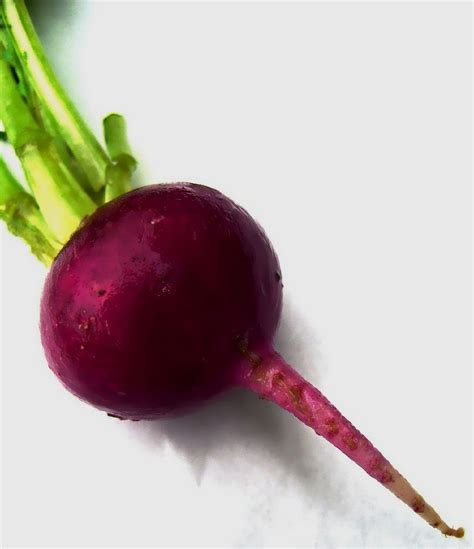 are beets a root vegetable learn how to grow beets in the garden