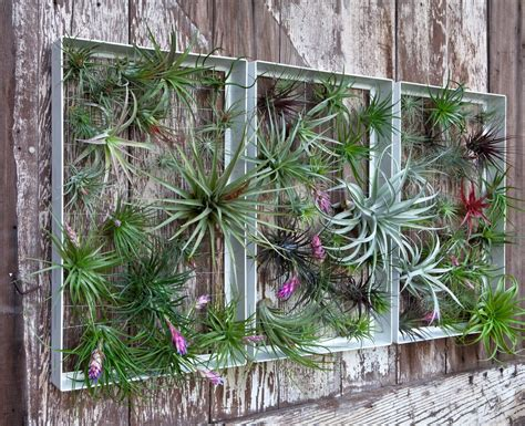 outdoor wall decor ideas plants airplantman living walls