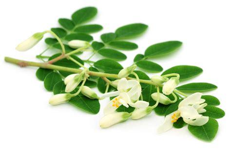wo kann gã nstig kã chen kaufen moringa pulver g 252 nstig kaufen ronald ivarsson