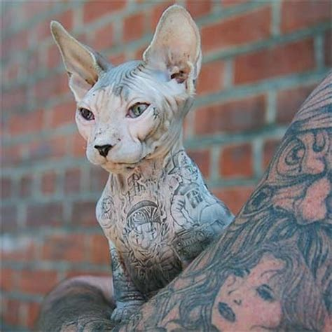 cat tattoo commercial 54 best jamal images on pinterest