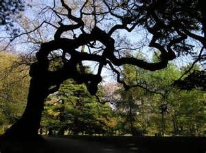 symbolism of trees the meaning of trees that s how the light gets in