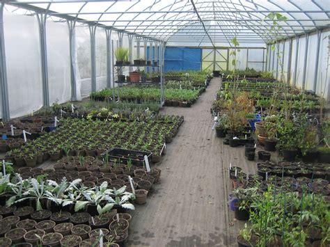 nursery plants volunteer nt mount stewart volunteer s garden diary