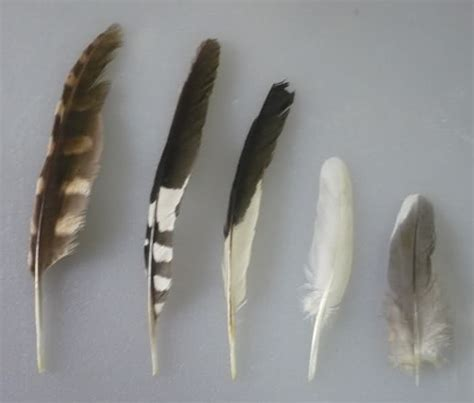 identify bird feathers driverlayer search engine