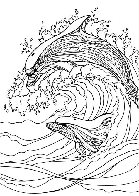 coloring pages for adults dolphins dolphin colouring page colouring in sheets