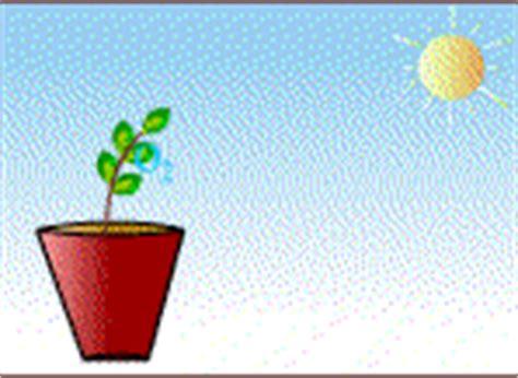 imagenes de flores gif im 225 genes animadas de plantas y flores gifs de plantas y