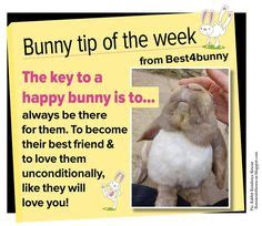Must For The Week The House Bunny by About Rabbits Poster High Maintenance But Totally