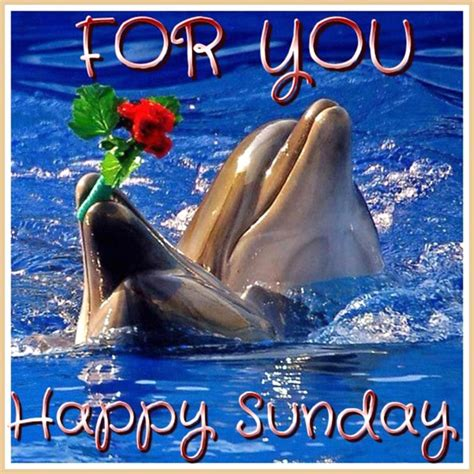 sunday images ᐅ top 56 sunday images greetings and pictures for