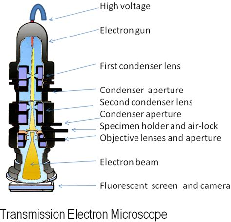 diagram of electron microscope electron microscope wikiwand