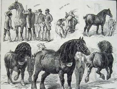 cavalli da carrozza cavalli da carrozza tradizioneattacchi eu
