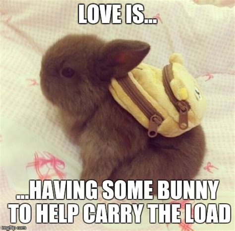 Cute Love Meme - cute bunny memes www pixshark com images galleries