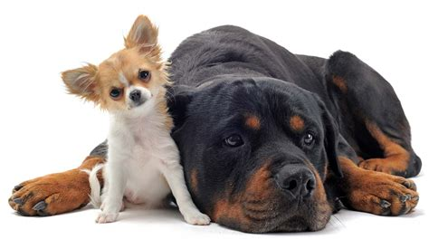 dogs finding dogs sizes small medium or large how to choose