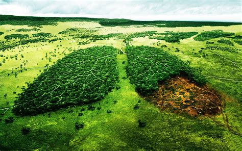 Deforestation patients lungs Desktop wallpapers 2560x1600