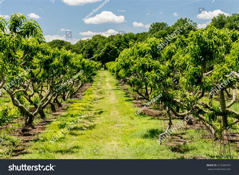 Southern Maryland Search Southern Maryland Orchard In Stock Photo 212406454