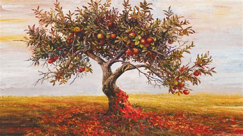Franchise Apple Tree apple tree bizart galleries