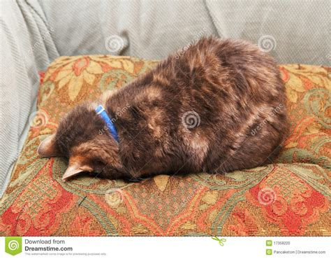 Cat On Pillow by Cat On A Pillow Stock Photo Image 17358220