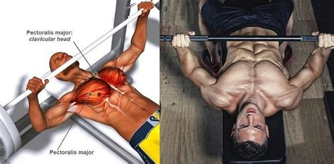 why bench press 7 reasons why your bench press is weak fitness workouts