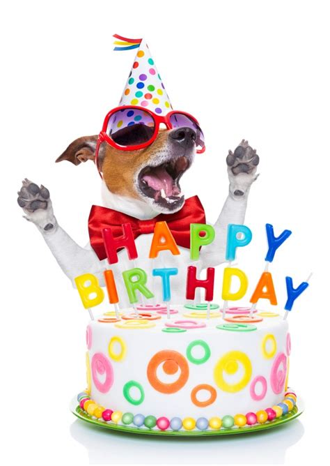 Design Home Interior Online by Doggy Birthday Feliz Anivers 225 Rio Enviar Online Cart 245 Es