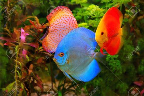 Poisson Aquarium Eau Chaude by Aquarium Eau Douce Poisson Poisson Naturel