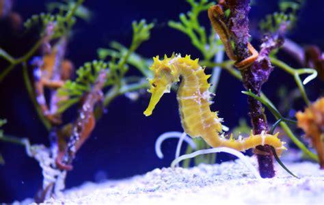 Aquarium Kinderzimmer Ideen by Salzwasseraquarium Einrichten 187 So Gehen Sie Dabei Vor