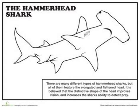 angel shark coloring page hammerhead shark coloring page oc 233 an 167 under the sea