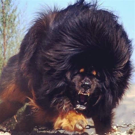 dogs belong   hogwarts house rovercom