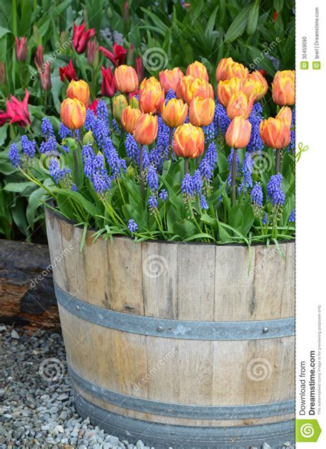 Tulip Planter by Orange Tulip Planter Stock Photo Image 30459090