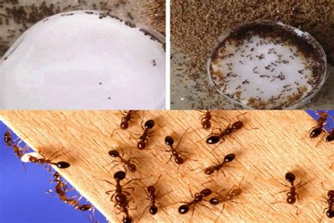 get rid of ants in house this simple diy idea will help you to get rid of ants in your house