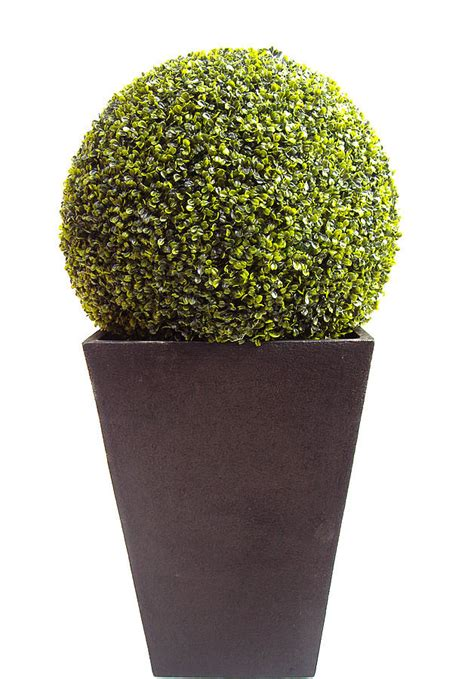 topiary balls in planters artificial boxwood topiary by artificial