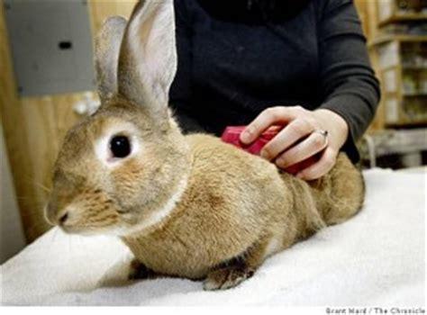 grooming house rabbit society