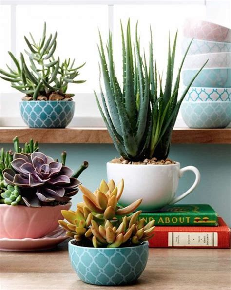 succulent planters teacup succulent garden ideas easy video tutorial