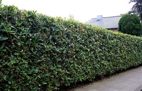 sichtschutz garten hoch zaun und hecke gabionen und pflanzen als sichtschutz im